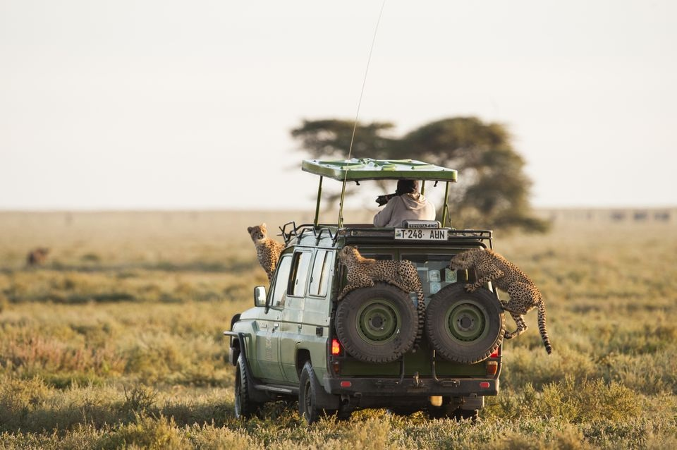 Tanzania safari – A detailed Guide