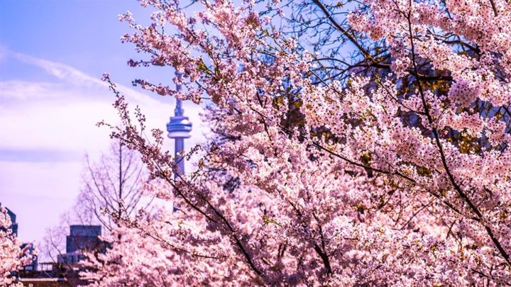 Things to do in Toronto this spring
